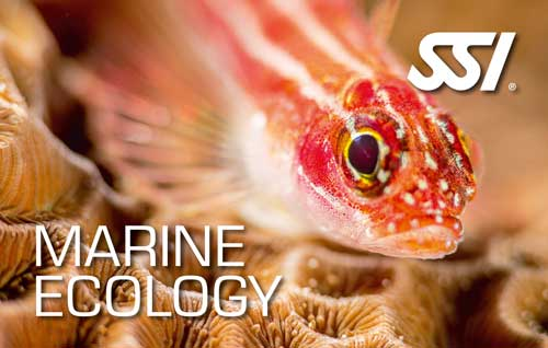 Marine Ecology Speciality Course