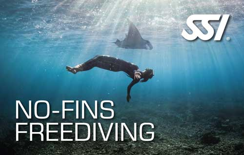 Freediving Courses in the Philippines with the Freedive