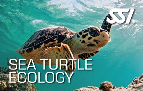 Sea Turtle Speciality Course
