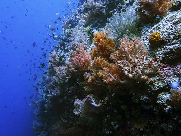 Bohol Coral Reef