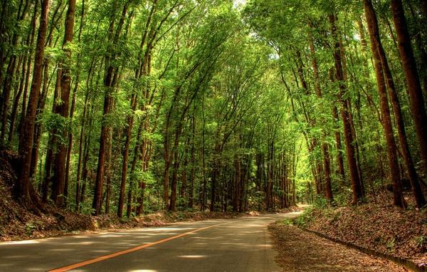 Bohol's Man Made Forrest